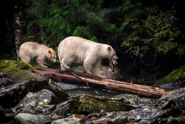 last call for sonys world photography awards 130621820903120555  c kyle breckenridge canada entry nature and wildlife categor