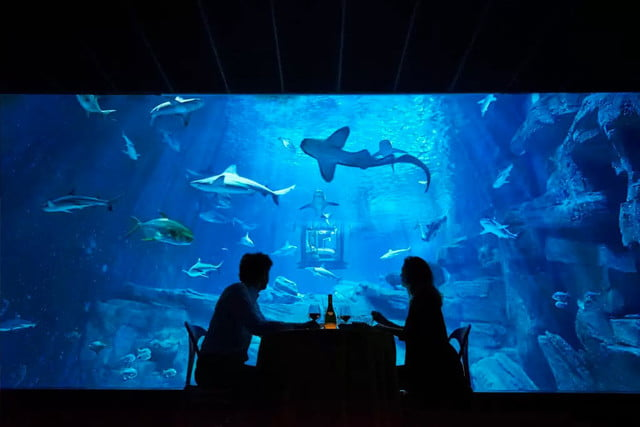 sleep underwater paris aquarium sharks airbnb de shark 003
