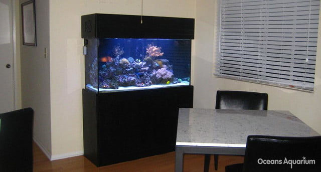homes with their own shark tanks ag10