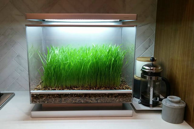 the biopod is a microhabitat thats rainforest on your countertop microclimate
