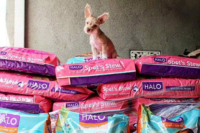 2016 oscars gift bags distinctive assets halo  purely for pets