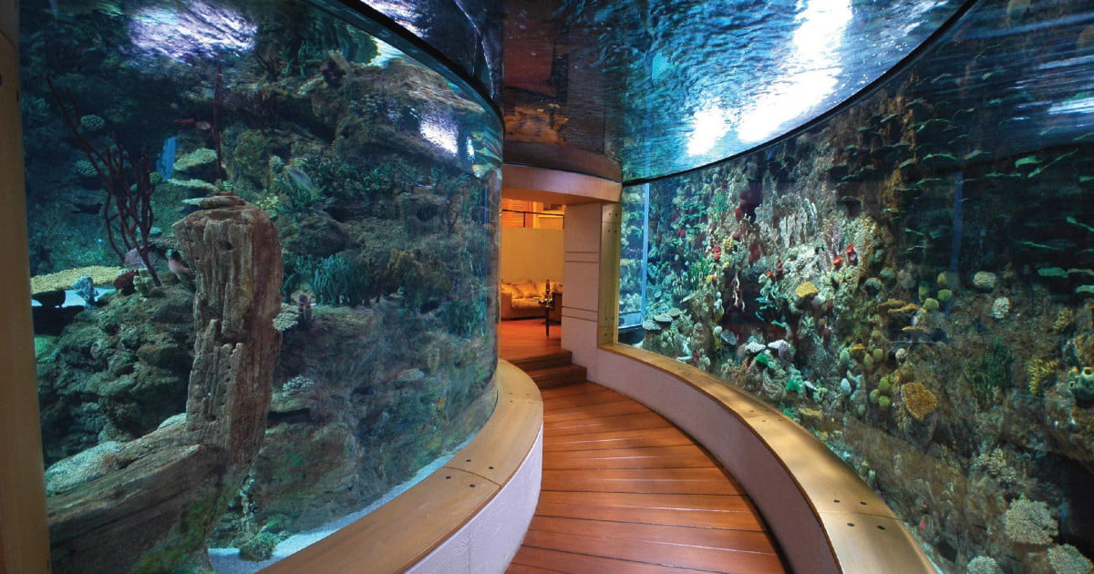 10 homes with their own shark tanks digital trends for 10000 gallon fish tank