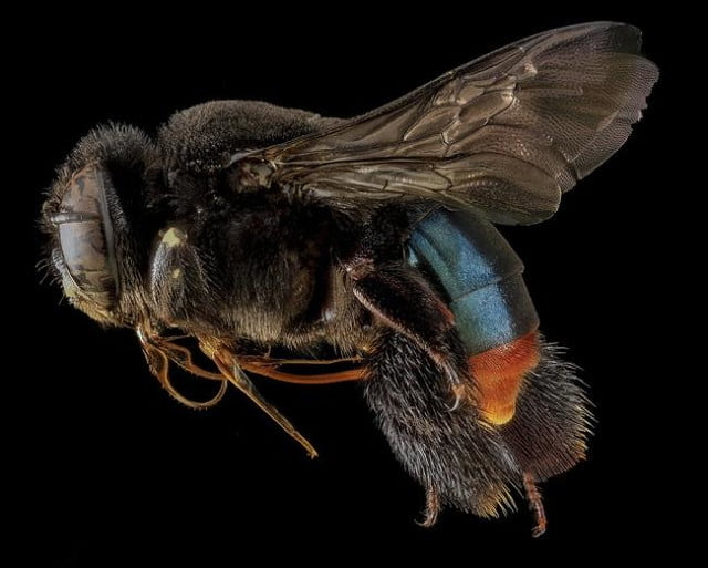 high resolution macro photos show amazing details bees wont cure fear bugs sam droge bee 9