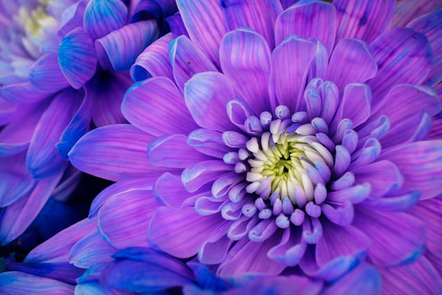 what are the biggest color trends in photography study suggests these bold hues shutterstock 569671843