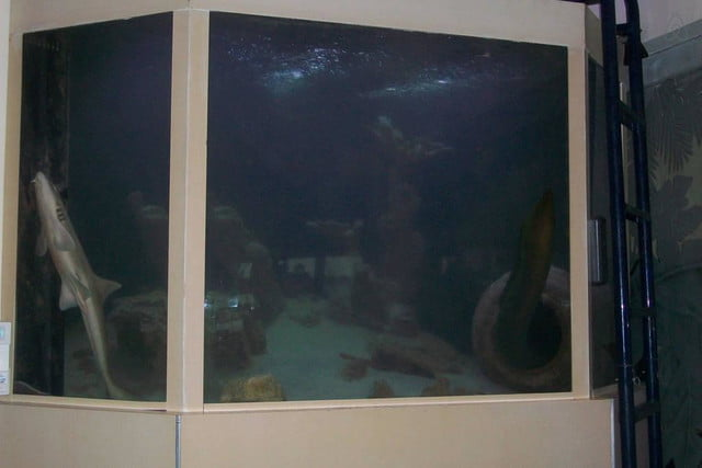 homes with their own shark tanks villa deep blue 4