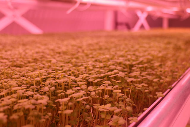 londons underground farm zero carbon food growing mustard close